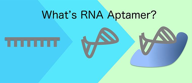 What's RNA Aptamer?